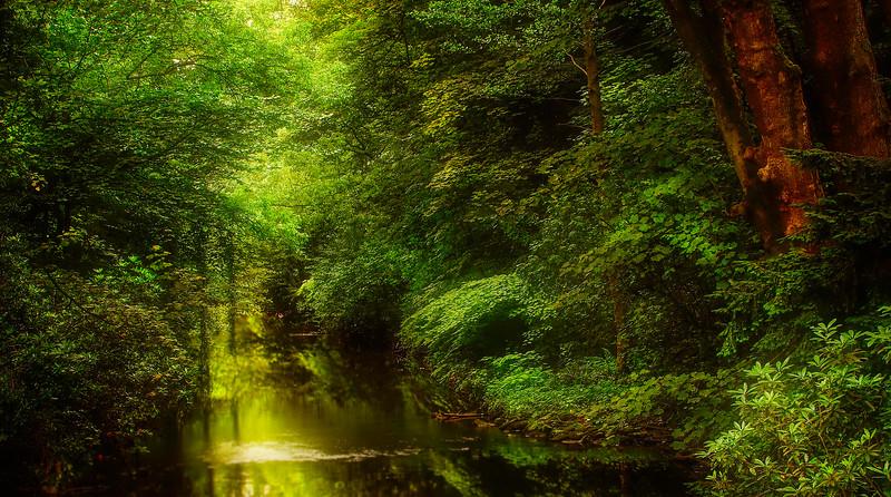 Forest Shadows-072.jpg