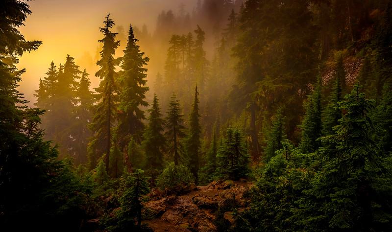 Forest Shadows-010.jpg