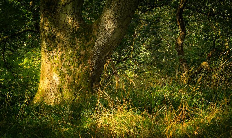 Forest Shadows-007.jpg