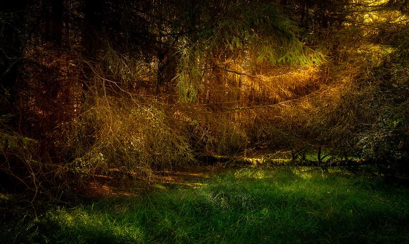 Forest Shadows-103.jpg