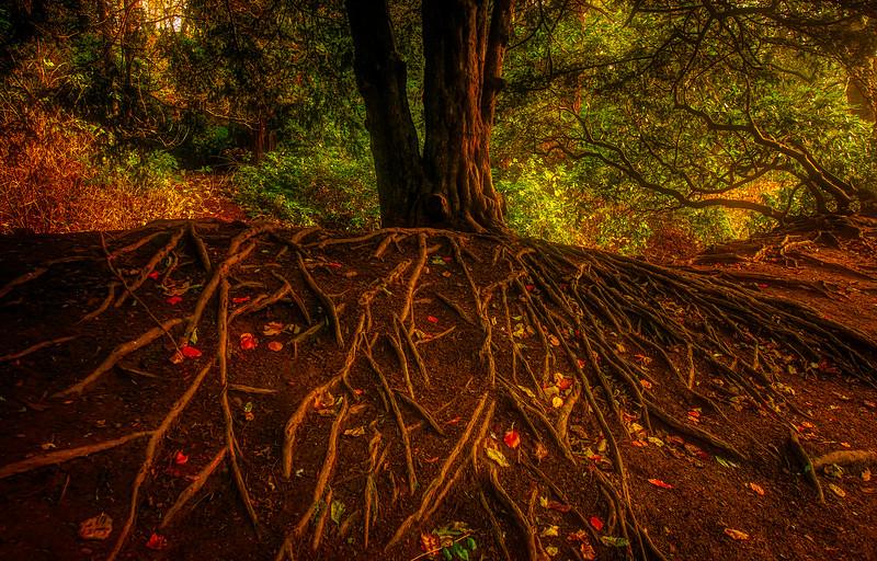 Forest Shadows-186.jpg