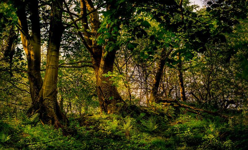 Forest Shadows-043.jpg