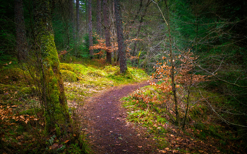 Forest Shadows-093.jpg