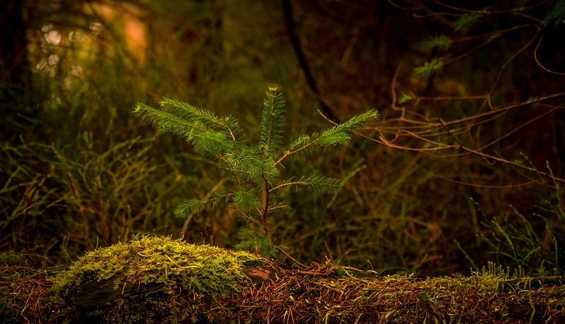 Forest Shadows-132.jpg