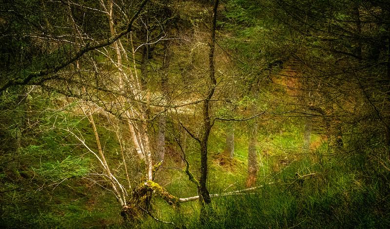 Forest Shadows-079.jpg
