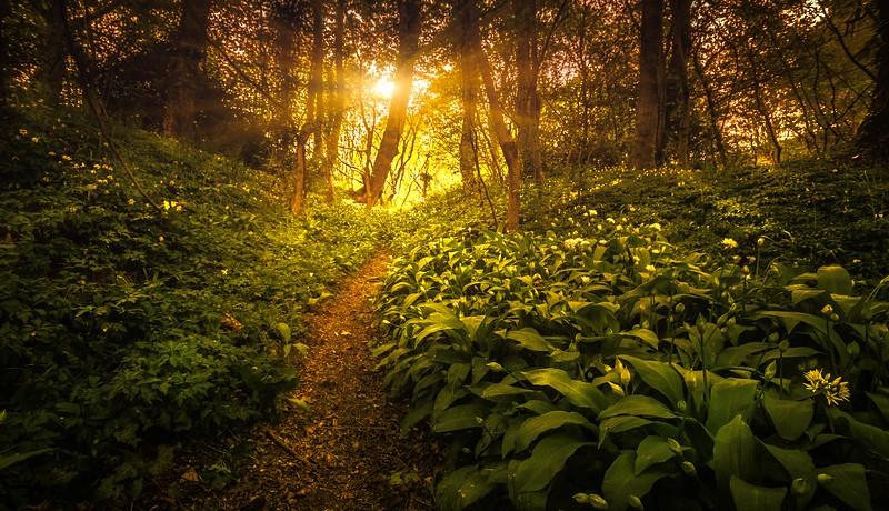 Forest Shadows-073.jpg