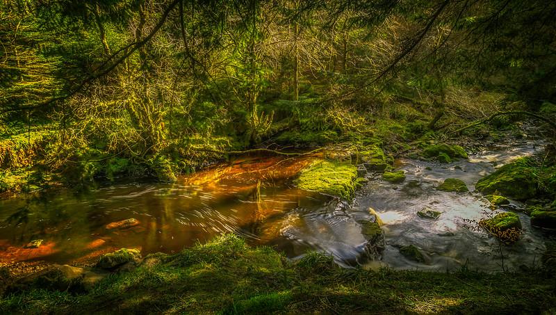 Forest Shadows-162.jpg