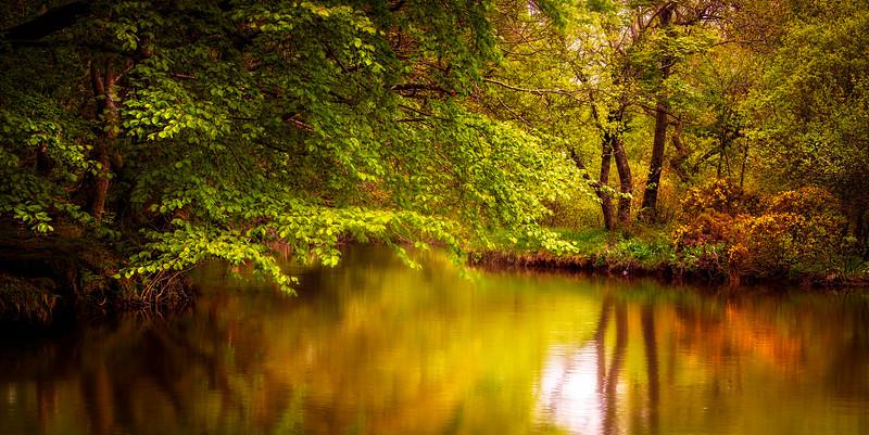 Forest Shadows-063.jpg