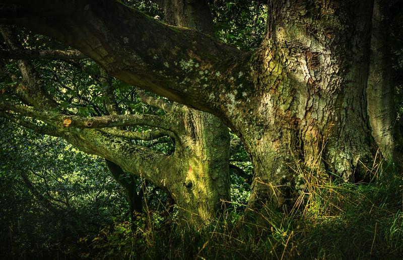 Forest Shadows-028.jpg