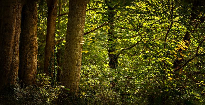Forest Shadows-140.jpg