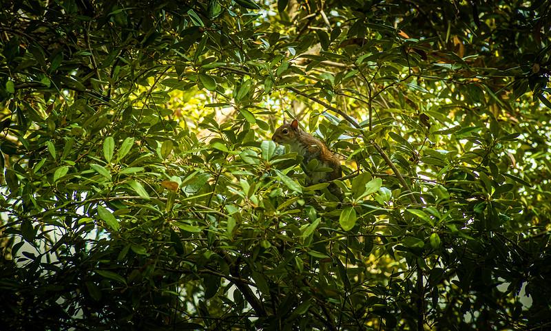 Forest Shadows-166.jpg