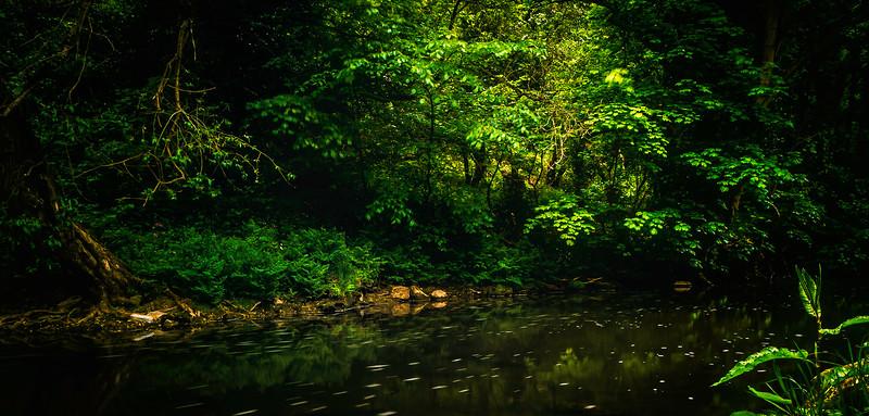 Forest Shadows-061.jpg