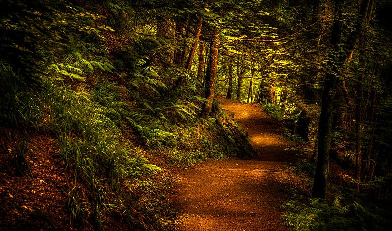 Forest Shadows-036.jpg