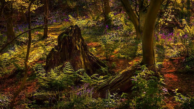 Forest Shadows-165.jpg