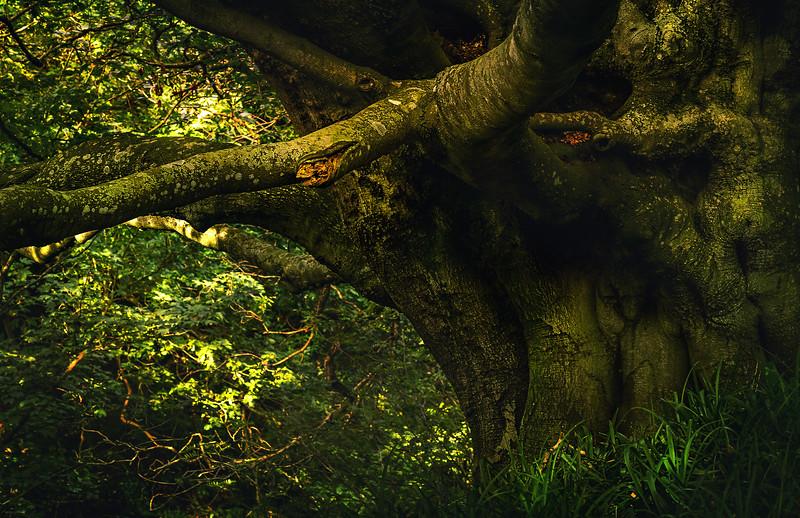 Forest Shadows-018.jpg