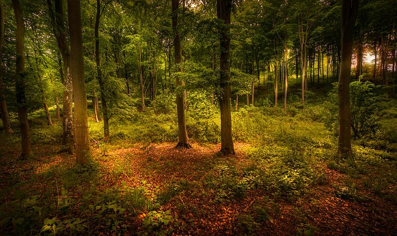 Forest Shadows-014.jpg