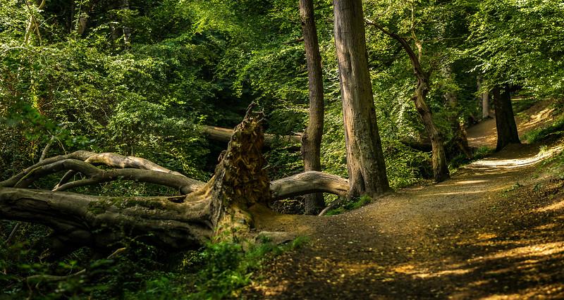 Forest Shadows-145.jpg