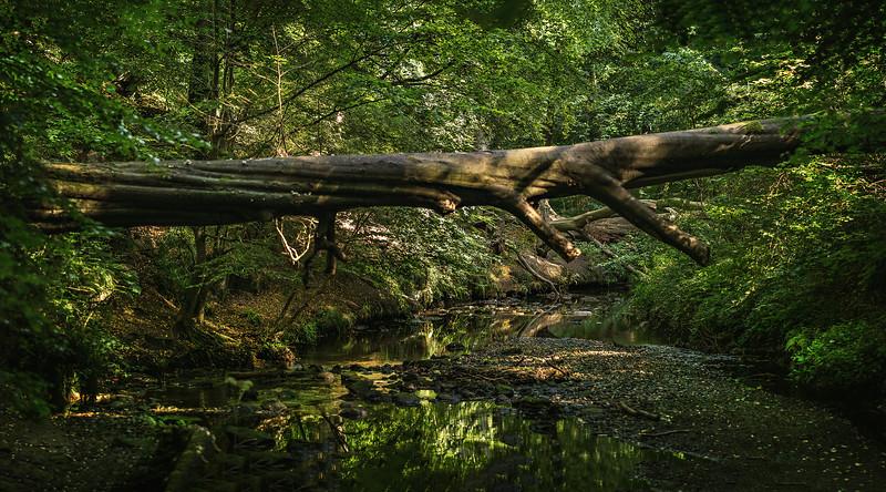 Forest Shadows-142.jpg