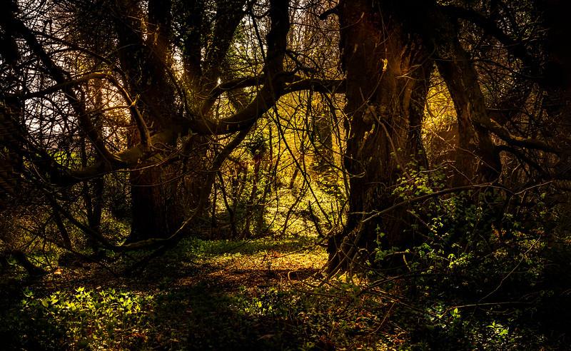 Forest Shadows-015.jpg