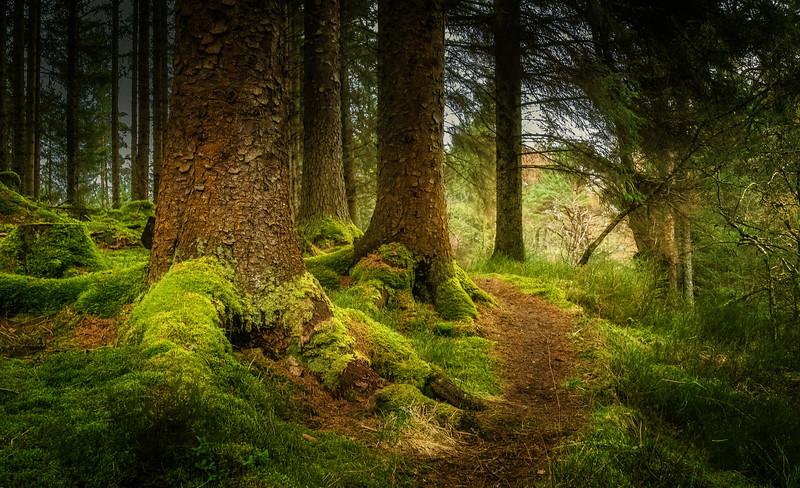 Forest Shadows-052.jpg