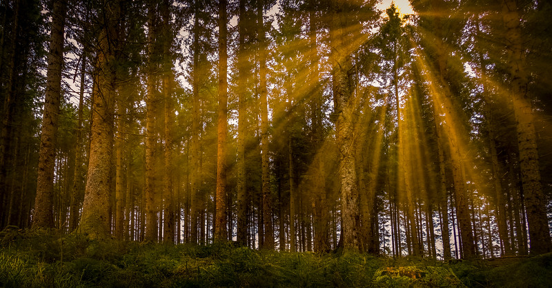 Forest Shadows-025.jpg