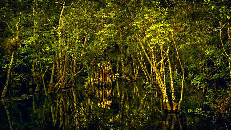 Forest Shadows-047.jpg