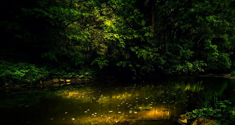 Forest Shadows-001.jpg
