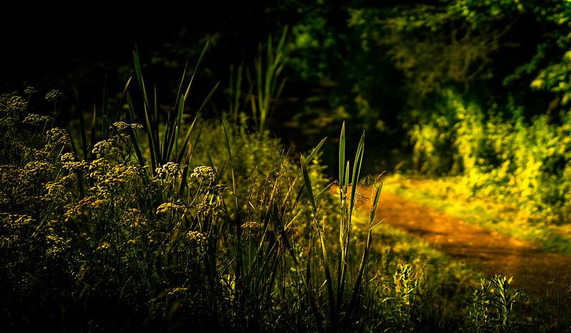 Forest Shadows-029.jpg