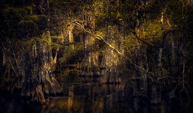 Forest Shadows-173.jpg