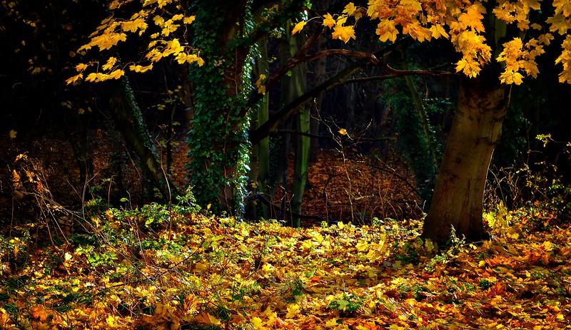 Forest Shadows-057.jpg