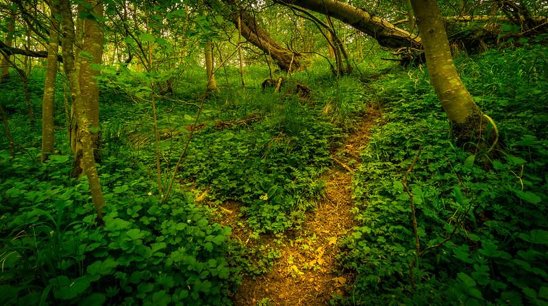 Forest Shadows-172.jpg