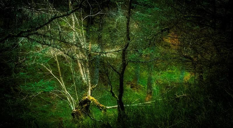 Forest Shadows-020.jpg