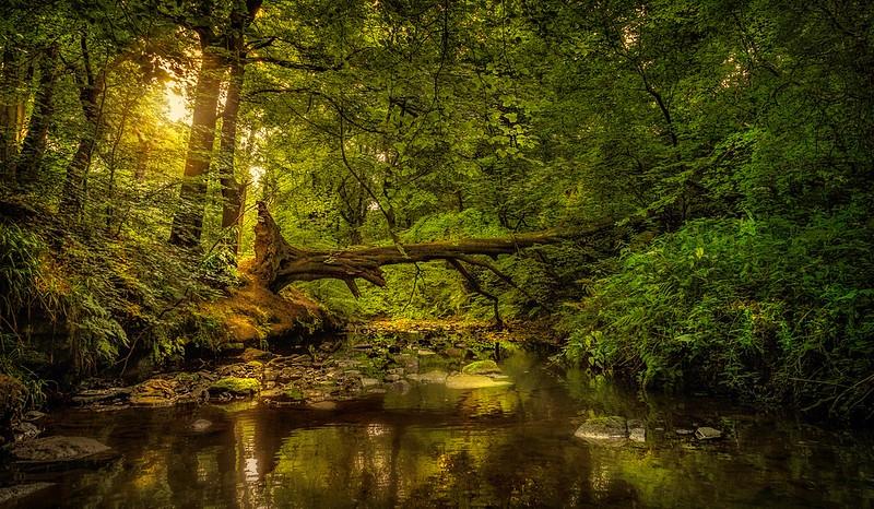 Forest Shadows-078.jpg