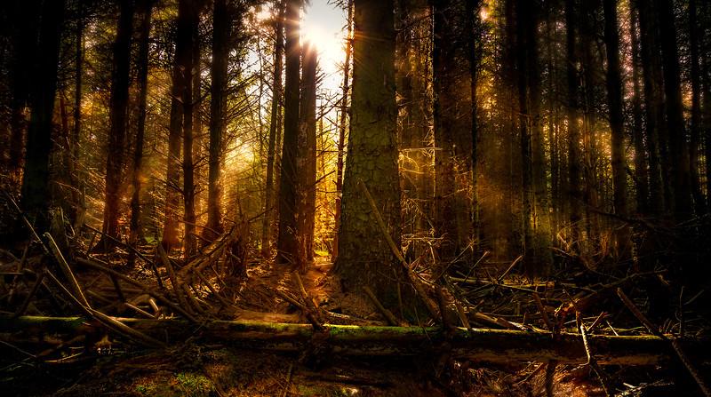 Forest Shadows-101.jpg