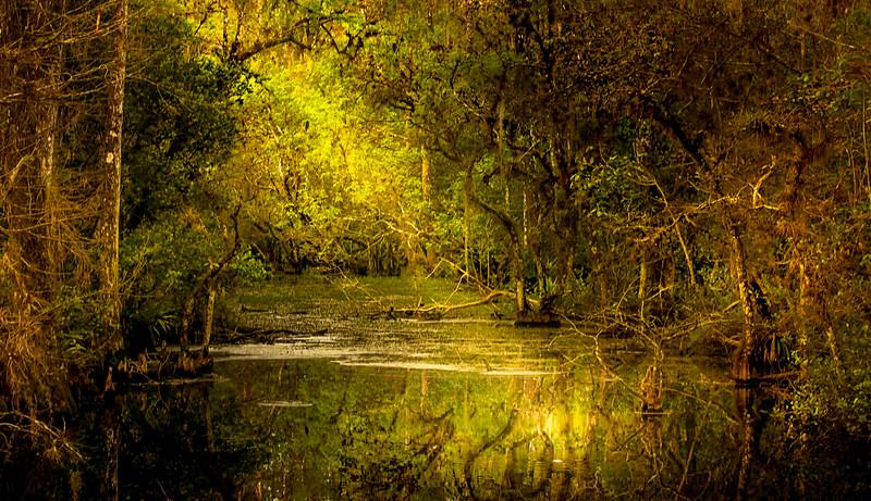 Forest Shadows-058.jpg