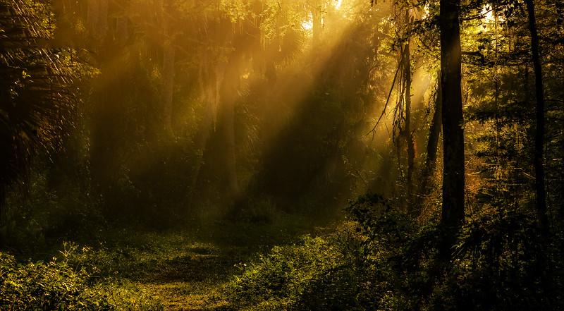 Forest Shadows-194.jpg