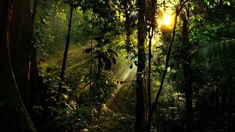 Forest Shadows-068.jpg