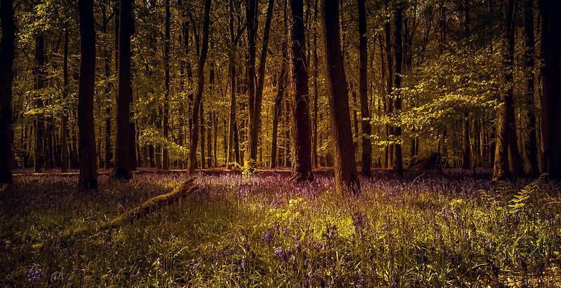 Forest Shadows-023.jpg
