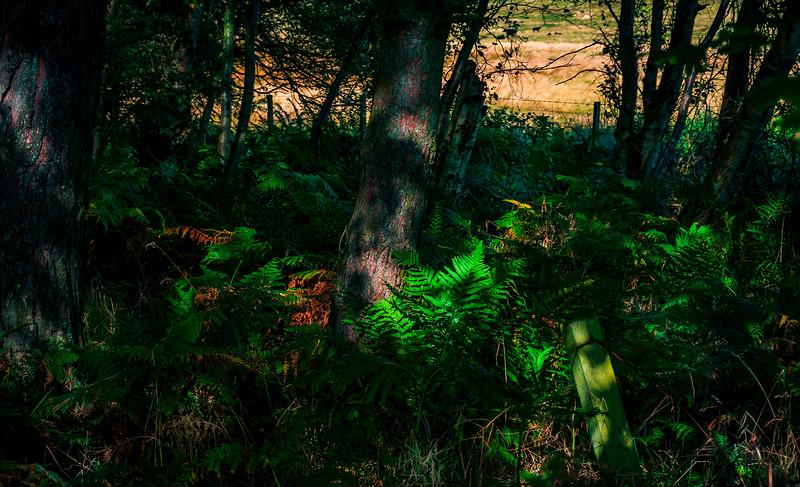 Forest Shadows-118.jpg