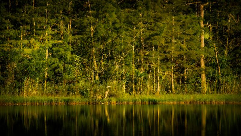 Forest Shadows-049.jpg