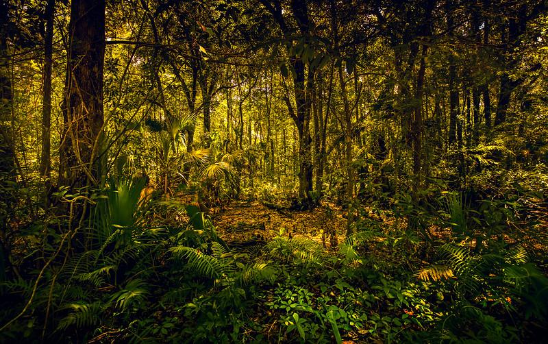 Forest Shadows-053.jpg