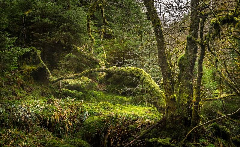 Forest Shadows-143.jpg