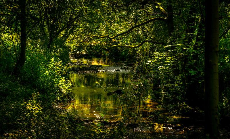 Forest Shadows-034.jpg