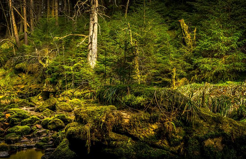 Forest Shadows-066.jpg