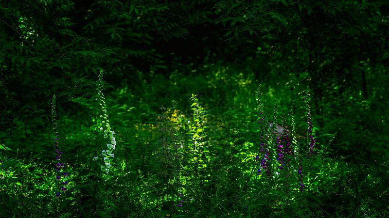 Forest Shadows-005.jpg
