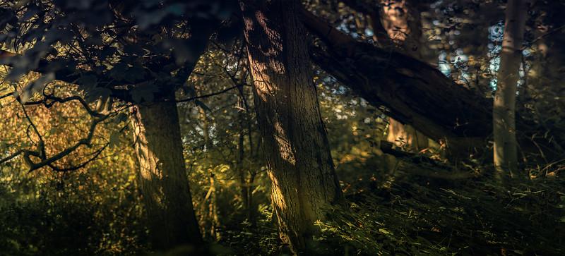 Forest Shadows-147.jpg