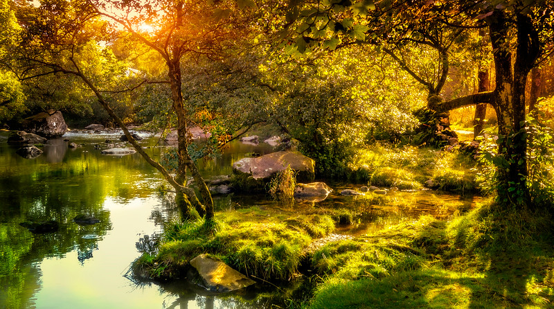 Forest Shadows-163.jpg