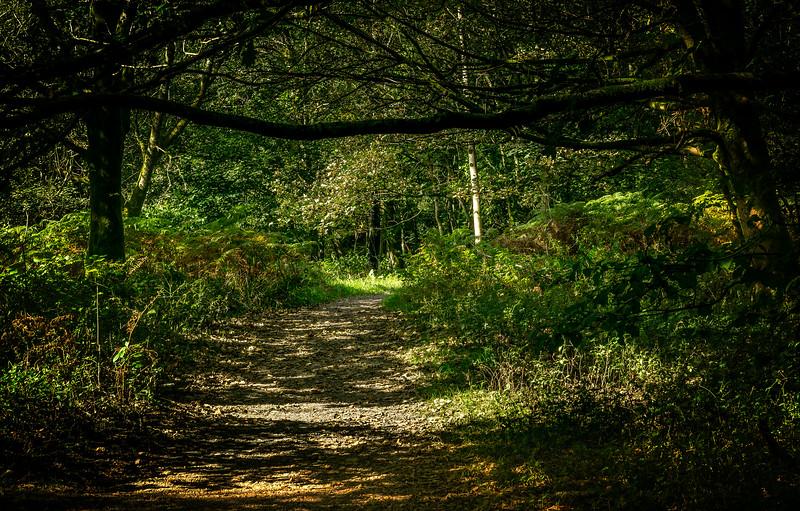 Forest Shadows-170.jpg