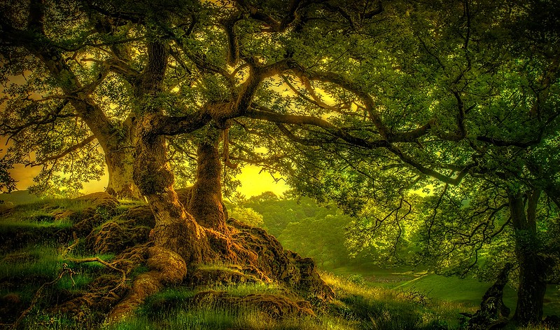 Trees Forests and Woodlands by Ray Bilcliff - www.trueportraits.com