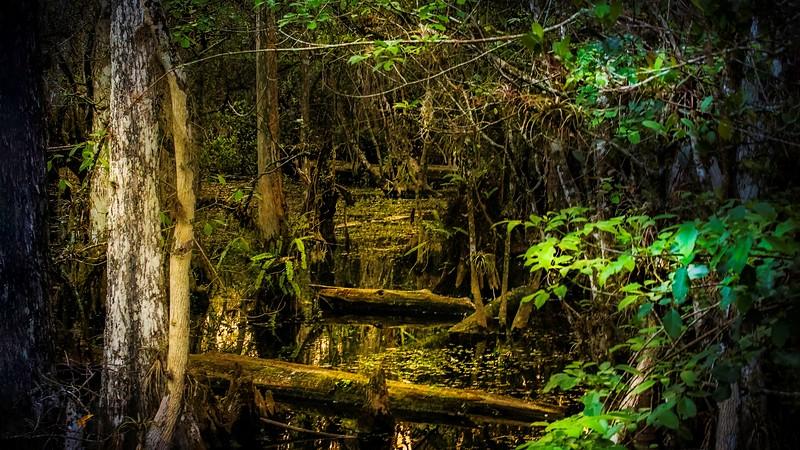 Forest Shadows-059.jpg